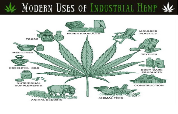 Hemporium TheGlobal Benefits of HEMP By Tony Budden