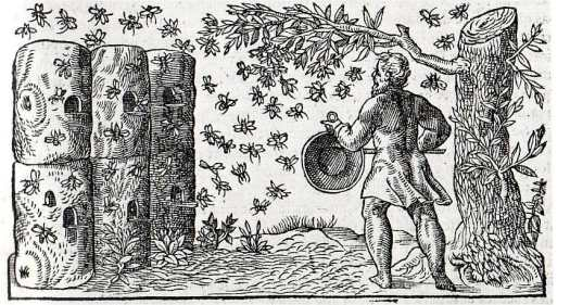 Bees-French-Apiary-1560